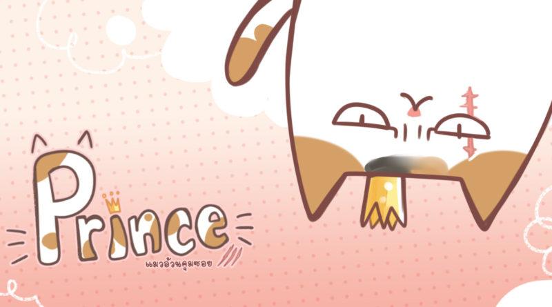 PRINCE – แมวอ้วนคุมซอย