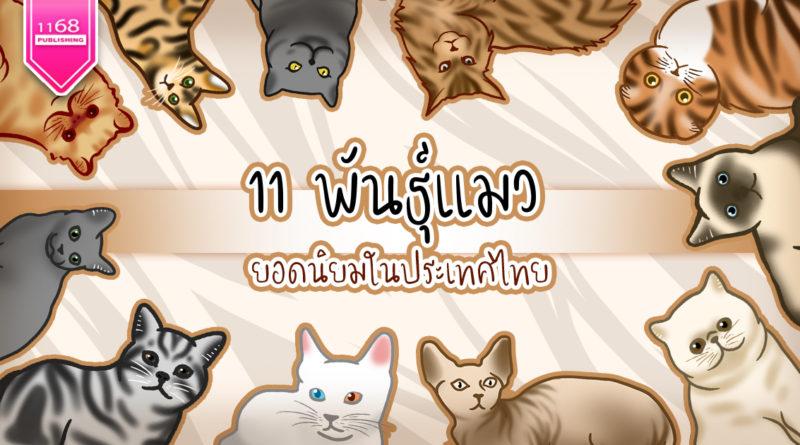 11 พันธุ์แมวขนปุยยอดนิยมในไทย