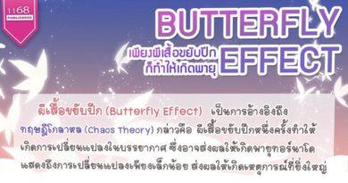 """เด็ดดอกไม้สะเทือนถึงดวงดาว ทฤษฎี """"ผีเสื้อขยับปีก"""" Butterfly effect"""